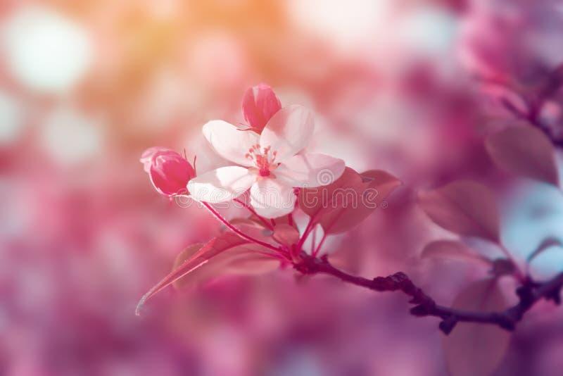 Fiore dei fiori bianchi al tramonto fotografie stock