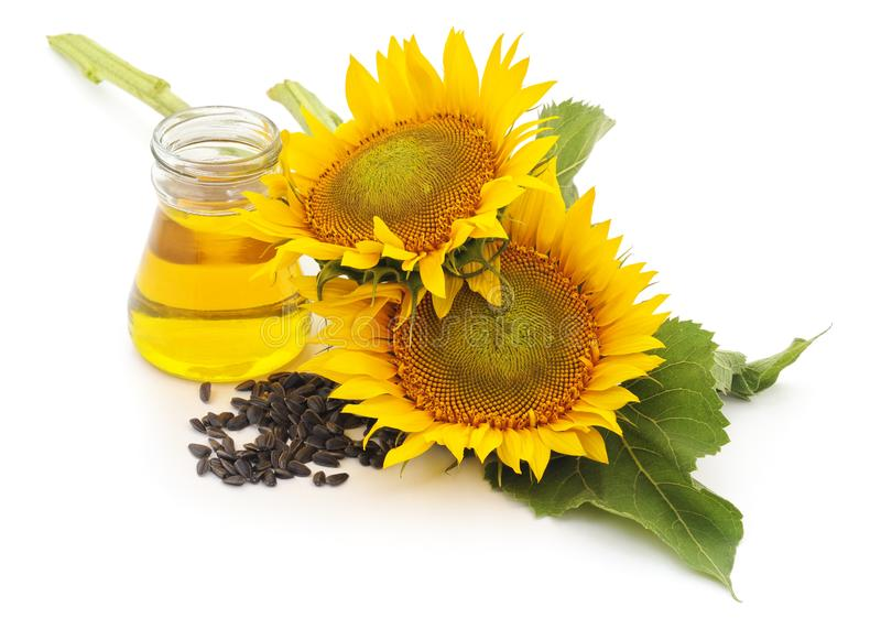 Fiore dei semi e dell'olio di girasole immagini stock libere da diritti