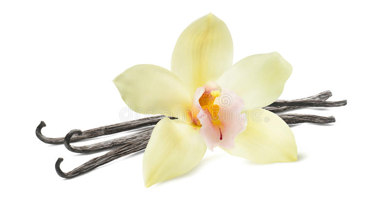 Fiore del baccello di vaniglia su fondo bianco immagine stock libera da diritti