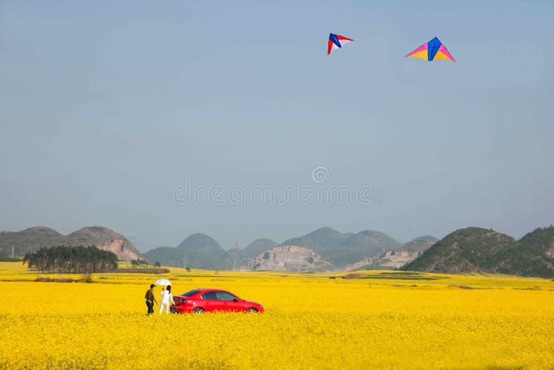 Fiore del canola del Yunnan Luoping su una piccola toppa dei fiori Bazi immagini stock
