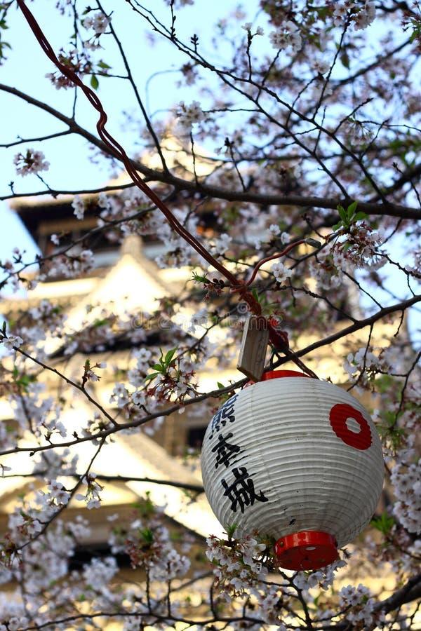 Fiore del castello e di ciliegia del Kumamoto immagine stock