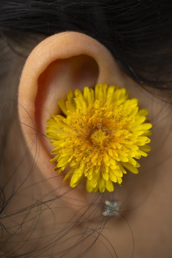 Fiore del dente di leone dietro l'orecchio della ragazza immagini stock libere da diritti