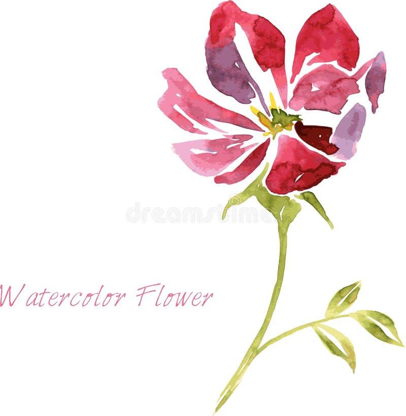 Fiore del disegno dell'acquerello illustrazione vettoriale