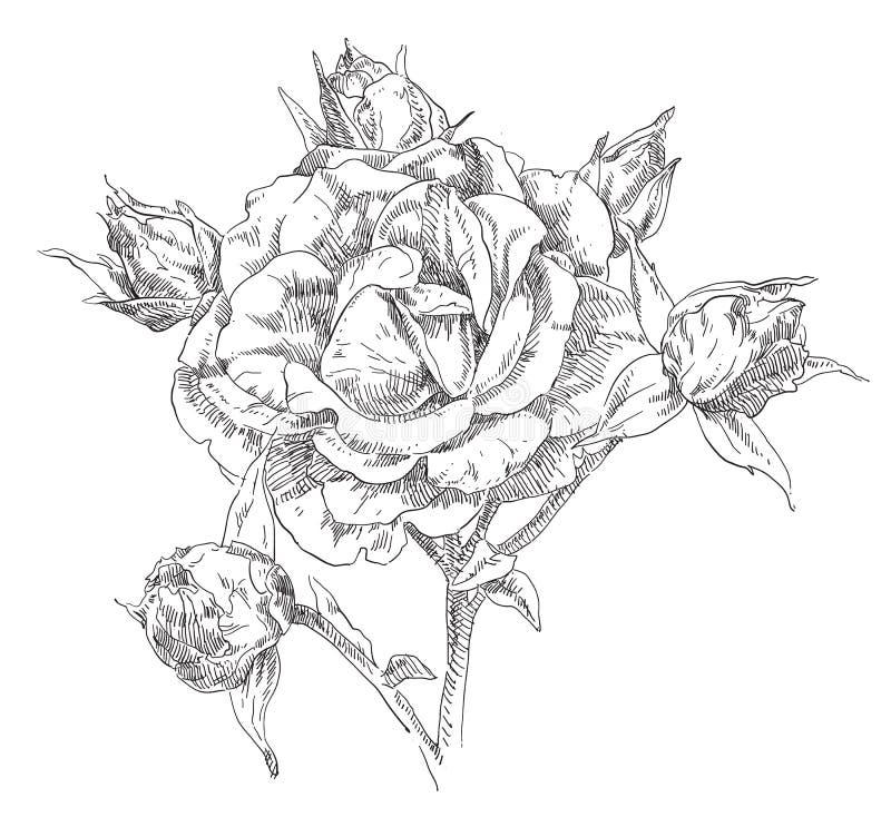 Fiore del disegno della mano illustrazione di stock