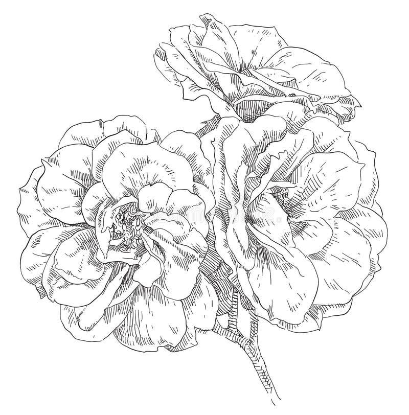 Fiore del disegno della mano illustrazione vettoriale
