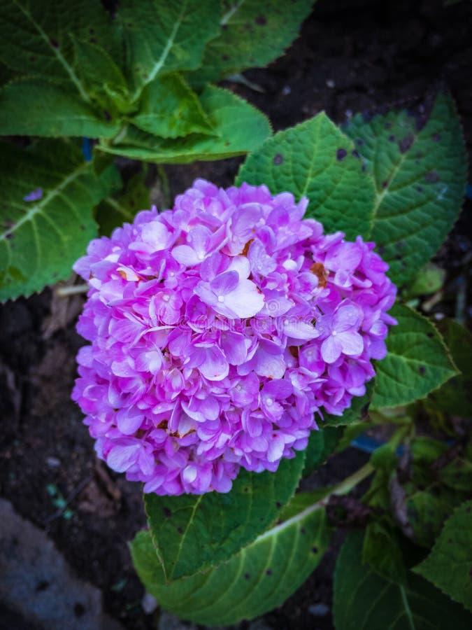 Fiore del fiore fotografie stock