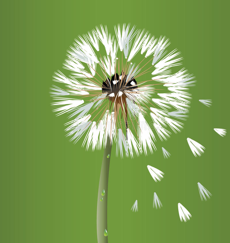 Fiore del fiore del dente di leone royalty illustrazione gratis