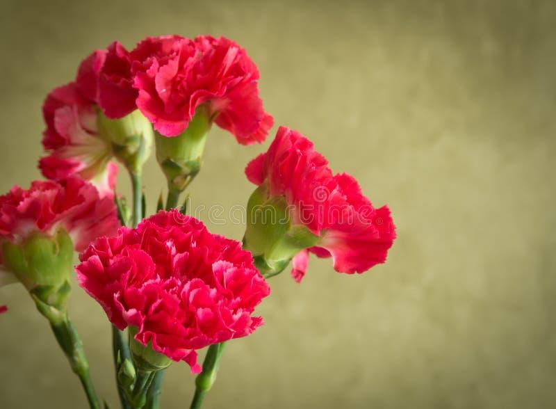 Fiore del garofano immagine stock libera da diritti