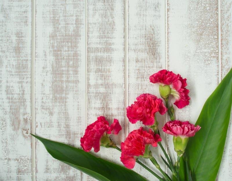 Fiore del garofano fotografie stock libere da diritti