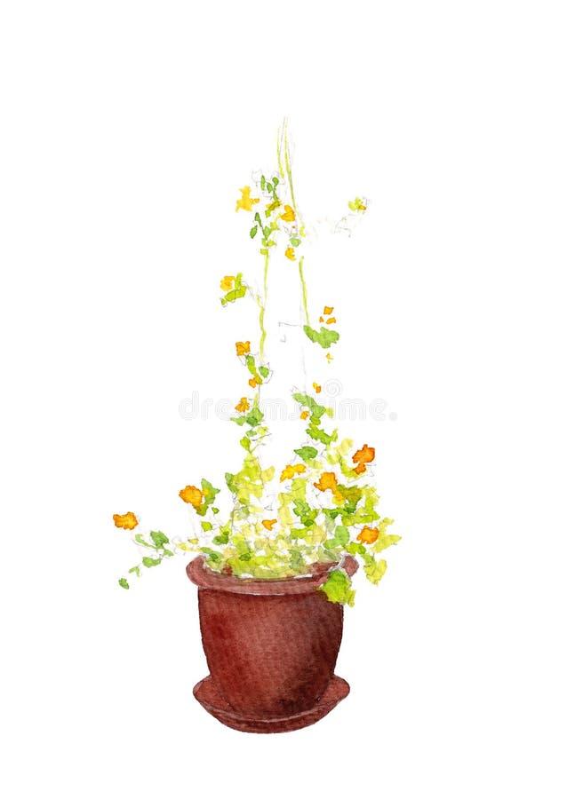 Fiori di giardinaggio in vaso isolati su fondo bianco Illustrazione Bindweed disegnata a mano ?????? Disegno estivo intensivo royalty illustrazione gratis