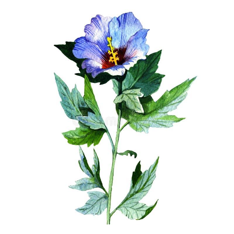 Fiore del girasole del Wildflower in uno stile dell'acquerello isolato illustrazione vettoriale