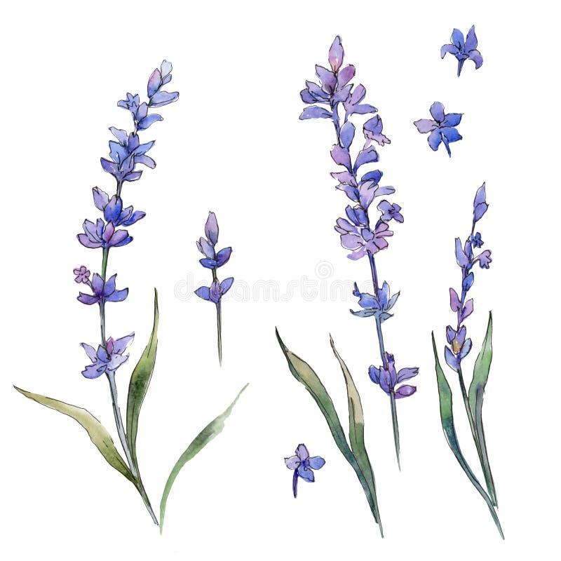 Fiore del lavander del Wildflower in uno stile dell'acquerello isolato illustrazione vettoriale