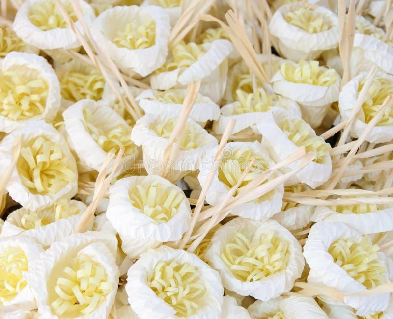 Fiore del Libro Bianco immagini stock