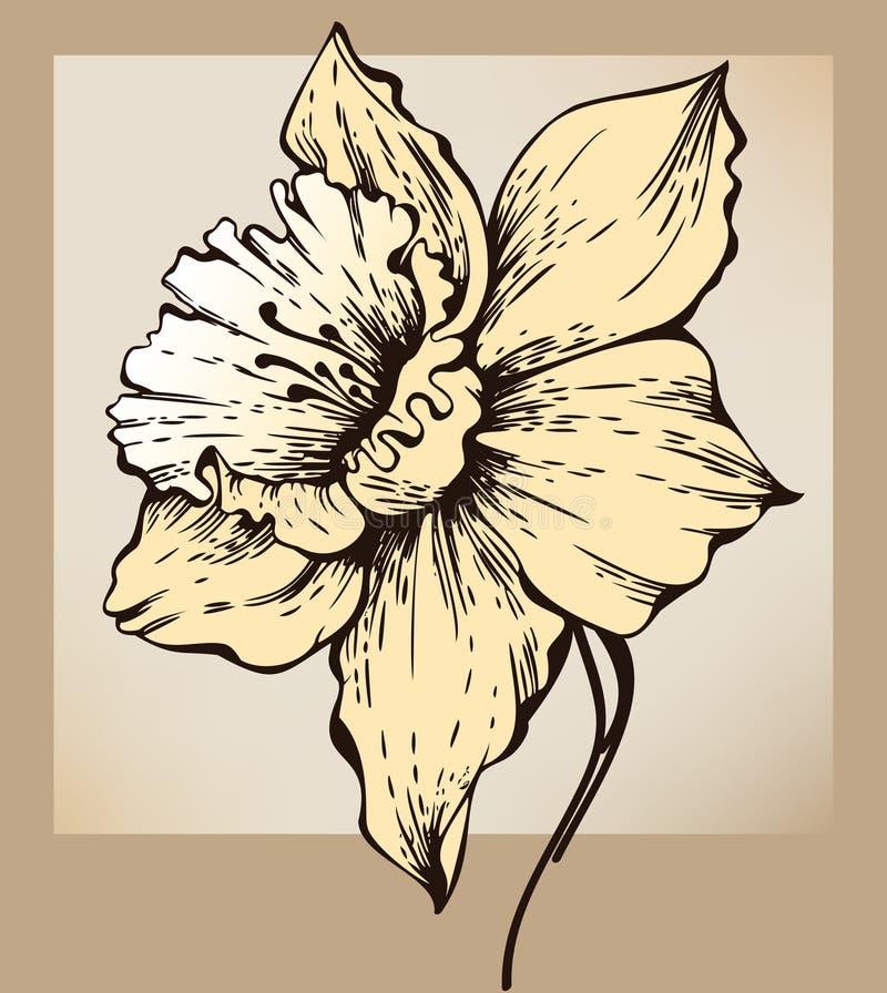 Fiore del narciso illustrazione di stock