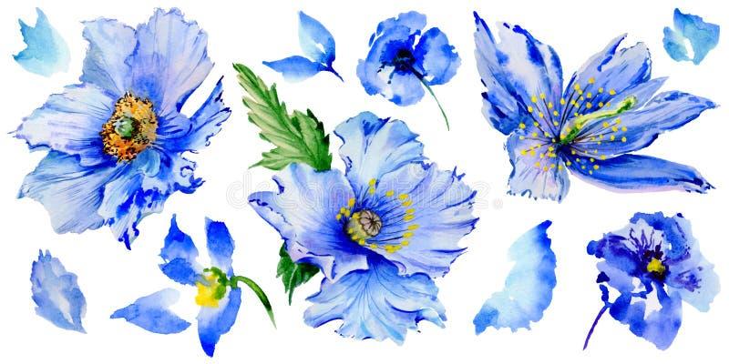 Fiore del papavero del Wildflower in uno stile dell'acquerello isolato illustrazione di stock