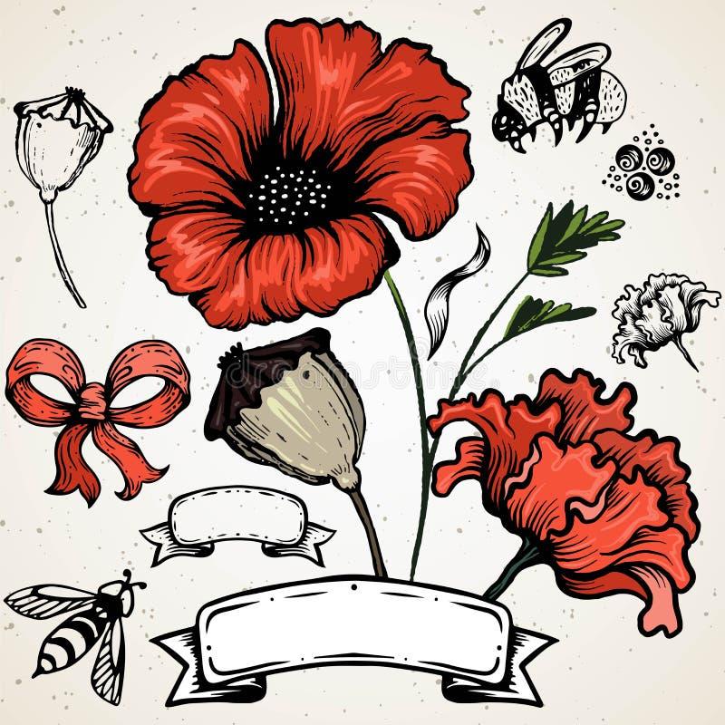 Fiore del papavero Papaveri rossi isolati su fondo bianco illustrazione vettoriale