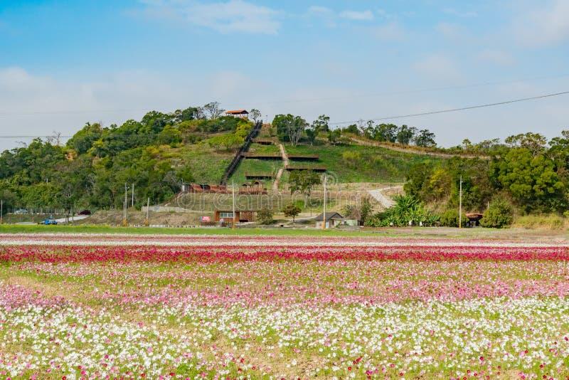 Fiore del fiore selvaggio sotto la traccia dell'allerta di Shanjiao immagini stock