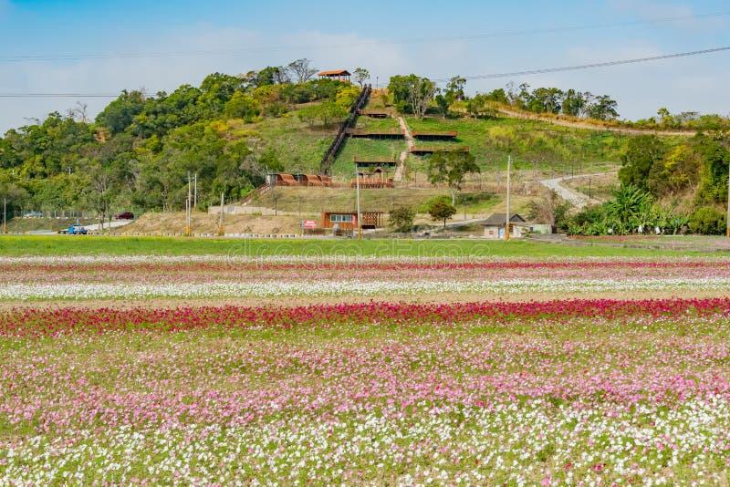 Fiore del fiore selvaggio sotto la traccia dell'allerta di Shanjiao fotografie stock