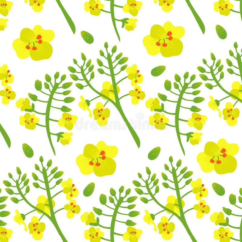 Fiore del seme di ravizzone del Canola del modello Fiore Fondo giallo e verde dei fiori royalty illustrazione gratis