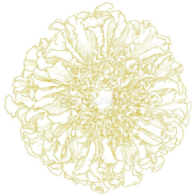 Fiore del tagete di vettore. fotografia stock