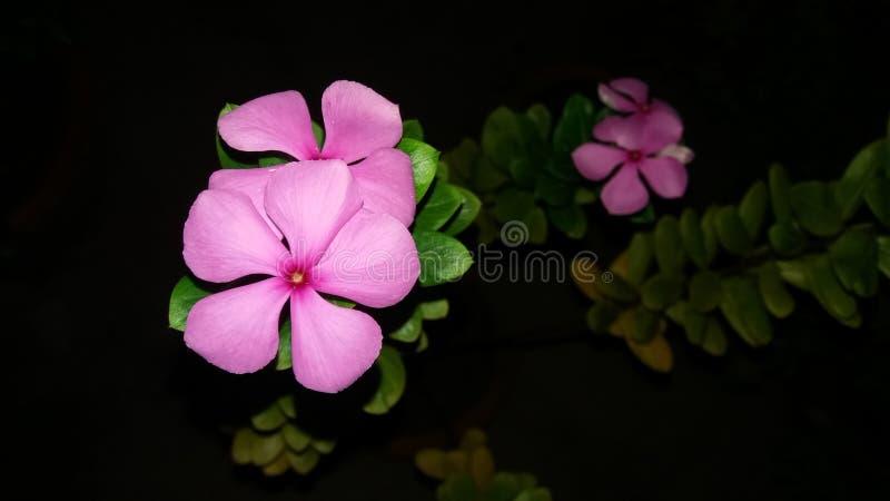 Fiore del tiro di notte immagini stock libere da diritti