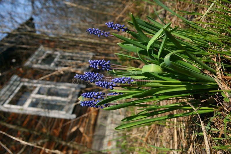 Fiore del villaggio fotografia stock libera da diritti