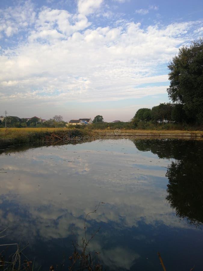 Fiore dell'acqua con effetto dello specchio fotografia stock libera da diritti
