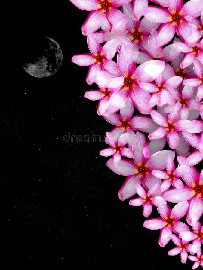 Fiore dell'amante immagini stock libere da diritti
