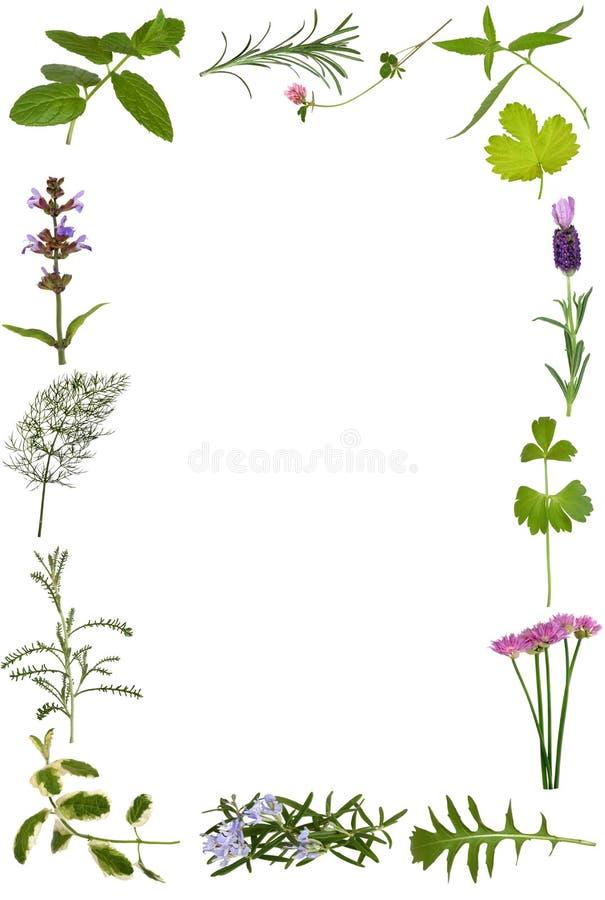 Fiore dell'erba e bordo del foglio fotografie stock libere da diritti