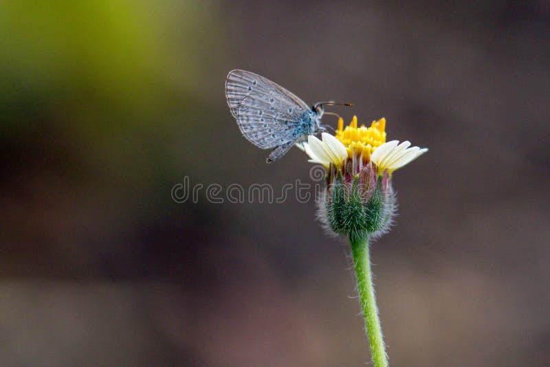 Fiore dell'erba e della farfalla fotografia stock