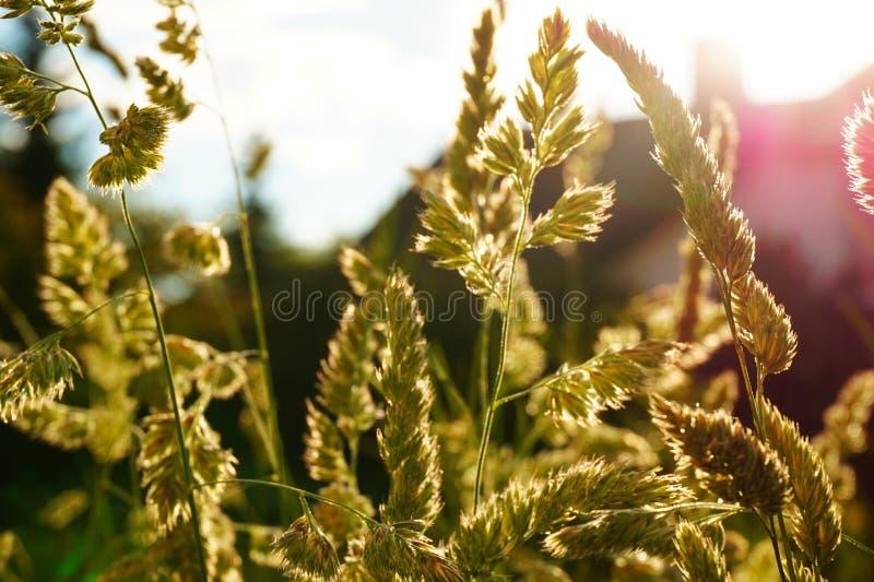 Fiore dell'erba in giardino fotografia stock