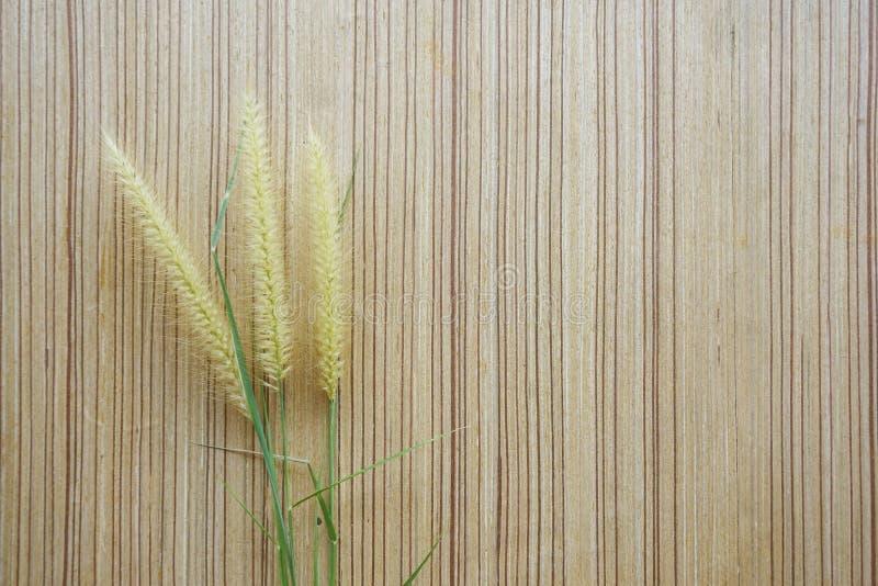 Fiore dell'erba su struttura di legno del pavimento immagine stock libera da diritti