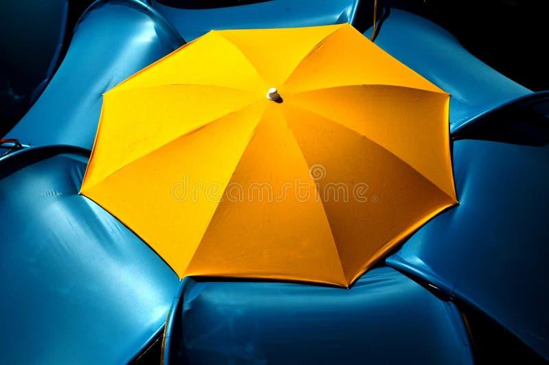 Fiore dell'ombrello di estate fotografie stock libere da diritti