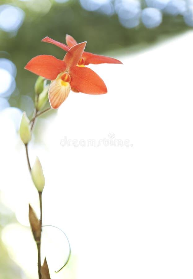 Download Fiore dell'orchidea fotografia stock. Immagine di vita - 30830974