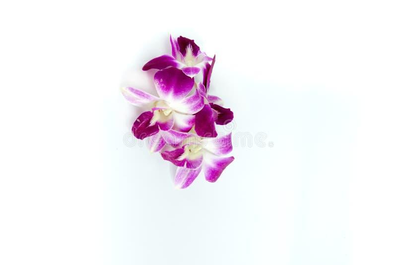 Fiore dell'orchidea su priorità bassa bianca immagine stock libera da diritti