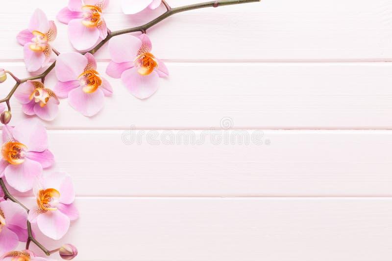 Fiore dell'orchidea sui precedenti pastelli di legno Stazione termale e scena di benessere fotografie stock libere da diritti
