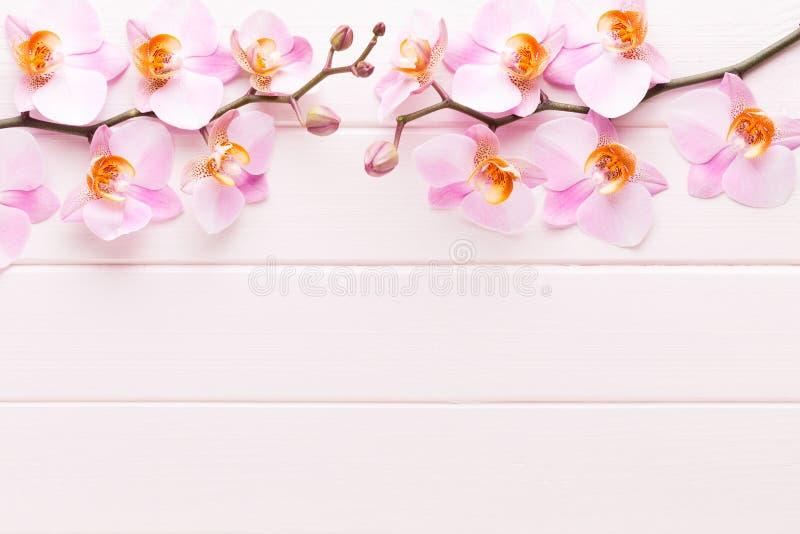 Fiore dell'orchidea sui precedenti pastelli di legno Stazione termale e scena di benessere fotografia stock