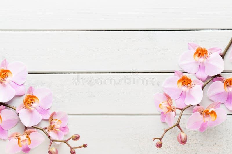 Fiore dell'orchidea sui precedenti pastelli di legno Stazione termale e scena di benessere immagine stock
