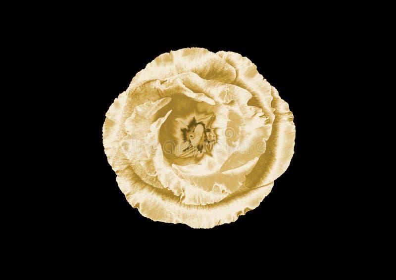 Fiore dell'oro immagine stock libera da diritti