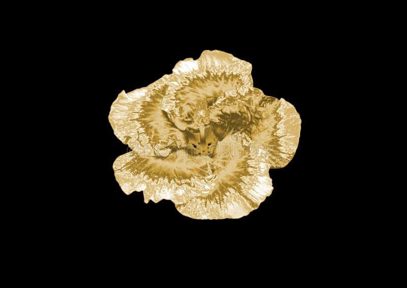 Fiore dell'oro fotografia stock libera da diritti