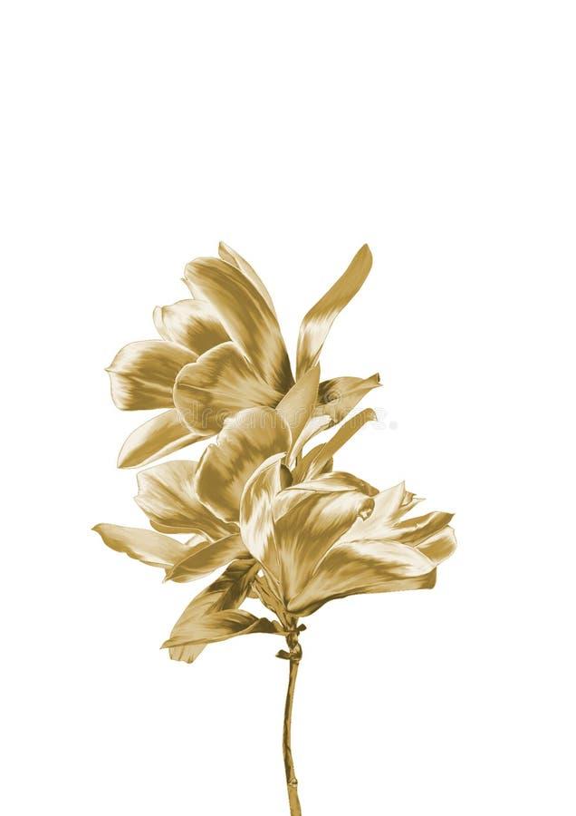 Fiore dell'oro immagine stock