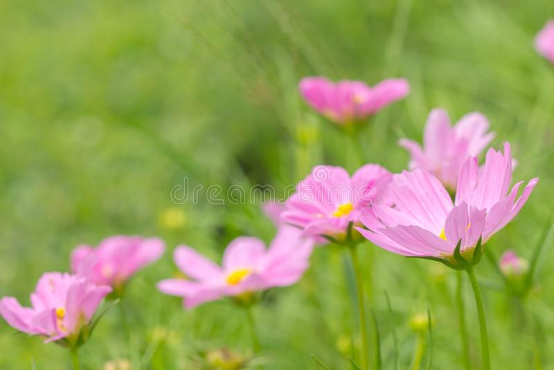 Fiore dell'universo fotografia stock
