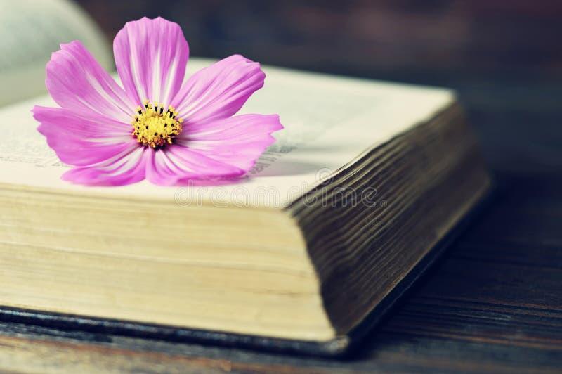 Fiore dell'universo sul libro aperto fotografia stock