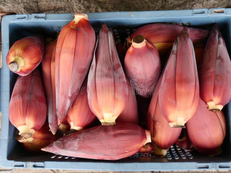 Fiore della banana immagine stock