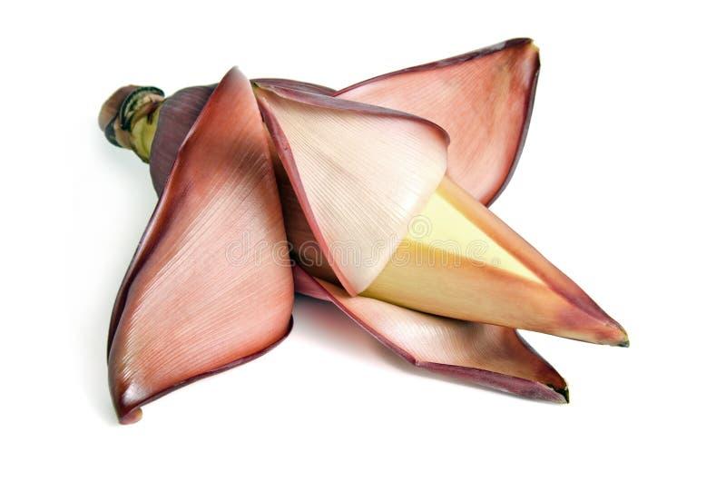 Fiore della banana, germoglio della banana & x28; anche chiamato come flower& x29 della banana; isolat fotografia stock libera da diritti
