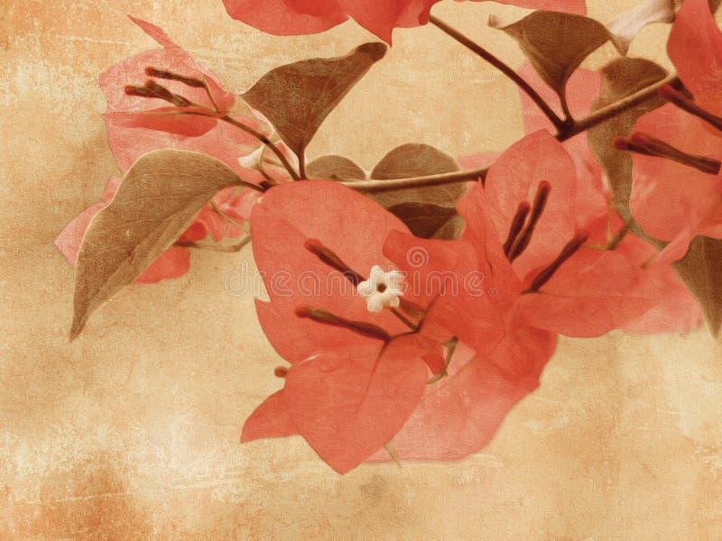 Fiore della buganvillea nella progettazione d'annata immagine stock