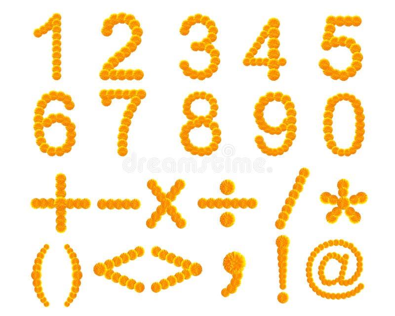 Fiore della calendula isolato su bianco, insieme del numero, segni C aggiunta immagine stock libera da diritti