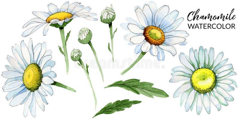 Fiore della camomilla del Wildflower in uno stile dell'acquerello isolato illustrazione di stock