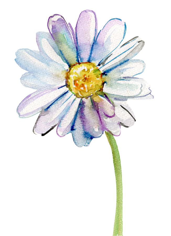 Fiore della camomilla, illustrazione dell'acquerello royalty illustrazione gratis