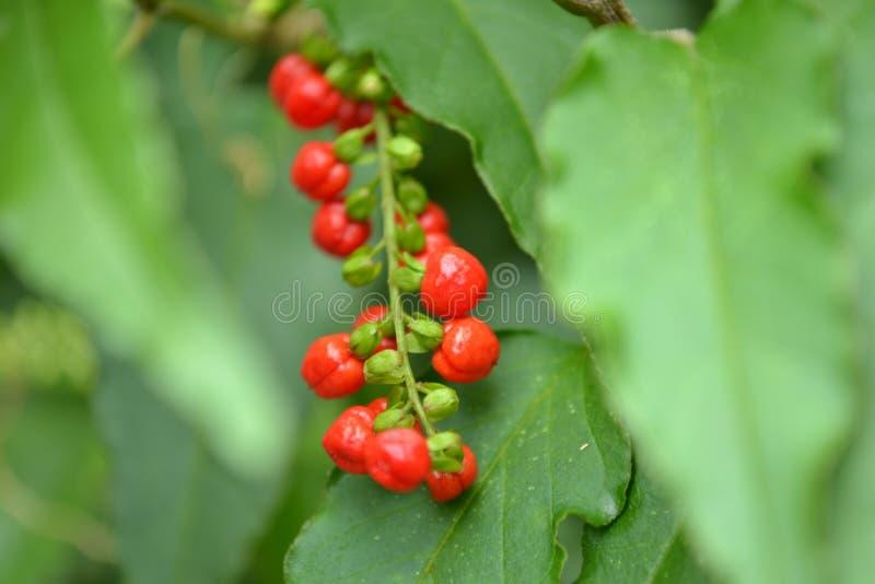 Fiore della frutta immagine stock libera da diritti